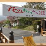 2018広島造幣局「花のまわりみち」来年に期待