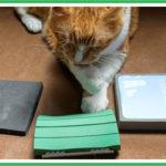 ペットの抜け毛掃除用アイテムの比較
