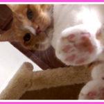 巨大な猫の為のキャットタワーのカスタマイズ