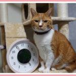 猫の絵が動くBRUNOスリットアニメーション時計について