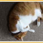 ペットの足音や床の保護にお手頃価格のタイルカーペットを設置