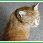 ペットの足音対策で床マットの音の聴き比べ