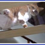 老猫だからキャットタワーの最上段からは慎重に降ります
