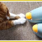 猫にオレンジ色のピンポン玉で遊ばせていると危険?
