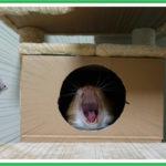 猫型だから押し入れの中で寝るのが好きらしい