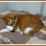 防音用にタイルカーペットを設置して猫が喜ぶ様子