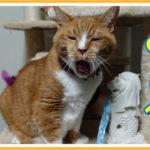 我が家のマーライオンと猫の反応