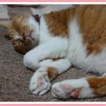 猫に効く!魔法の猫ほいほいカーペット