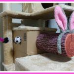 ウサギの耳の不思議