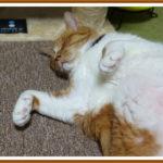 我が家の猫が安心して寝る場所が拡大中