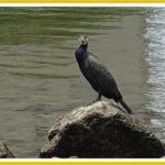 6月の広島市内で見かけた野鳥