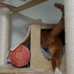 段ボール猫ハウスは「のれん」がポイント!