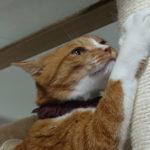 キャットタワーの爪とぎ用のポールの耐久性