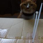 子供と思考回路が似ている我が家の猫さんの習性