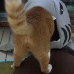 猫の避難場所