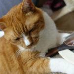 猫のブラッシングの不思議