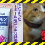 12歳の猫さん、スッキリンを試してみました