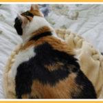 絶妙の距離で寝る猫さん