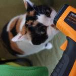猛暑の中、我が家の猫が好きな室温