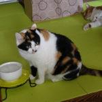 猫の水飲みの器