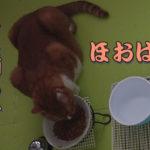 猫さんお食事中に「ぼろぼろぼろろ」