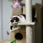 猫さんのカメラ目線