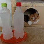 ペットの暑さ対策、かなり長持ちする冷凍ペットボトル