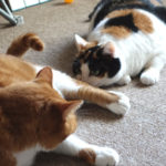 猫を2匹飼う事のメリット