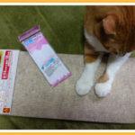 猫が安心して利用できる透明渡り板改良作業