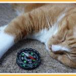 「猫も杓子も」寝てばかりです