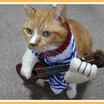 ギターを弾く猫?