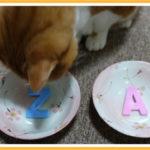 猫さんの餌の好みの判別基準