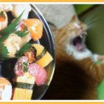 ヒヨリさんと疑似お寿司クッション