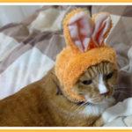 猫がアワビを食べると耳が落ちるについて