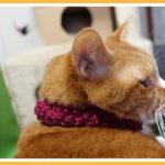 ひざの上に乗せた猫に噛まれる理由と学習能力