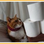 猫トイレの設置場所とオト