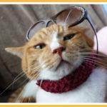 猫がストレスを感じている時の行動