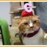 猫型カープ帽と優勝記念碑