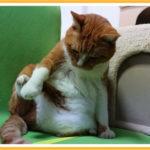 猫のかわやの処理