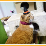 ハロウィン帽子の猫用フレームの作成