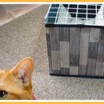 猫のチェックが入る中、コタツ用猫ハウスの作成