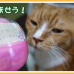 猫のかぶりもの:第19弾 ねこキャンディちゃん