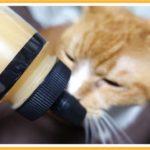 猫がハチミツを食べても大丈夫?その前に固まったハチミツを元に戻しましょう