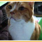 猫が喜ぶコタツ布団設置して変化と課題