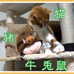 干支に猫がいる国と十二支の逸話