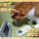 猫と人間が快適にすごせるエアコン設定温度