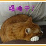 寝ている姿が多い猫ですが熟睡している時間は少ないようですね