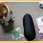 猫のおもちゃを作ってみました・・・・が
