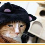 猫が黒猫に・・・・安っ!