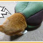 猫ハウスに入れる猫とつっかえた猫